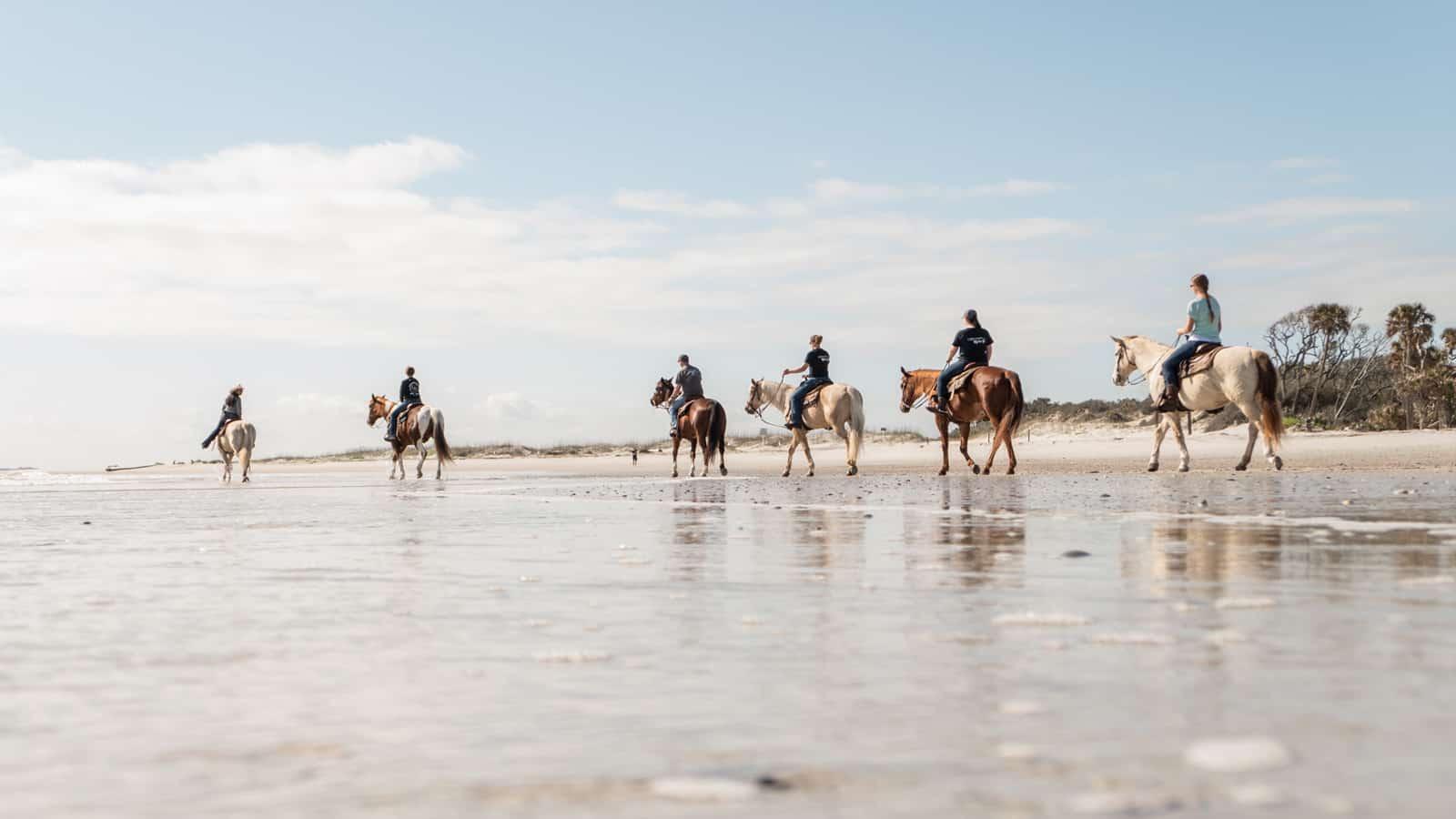 360 Video USA Horses