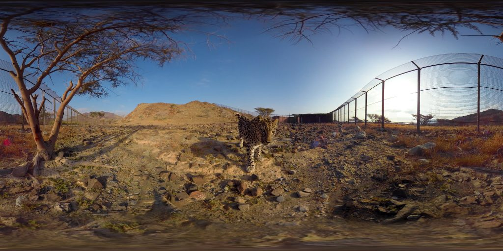 VR Tourism Arabian Leopard