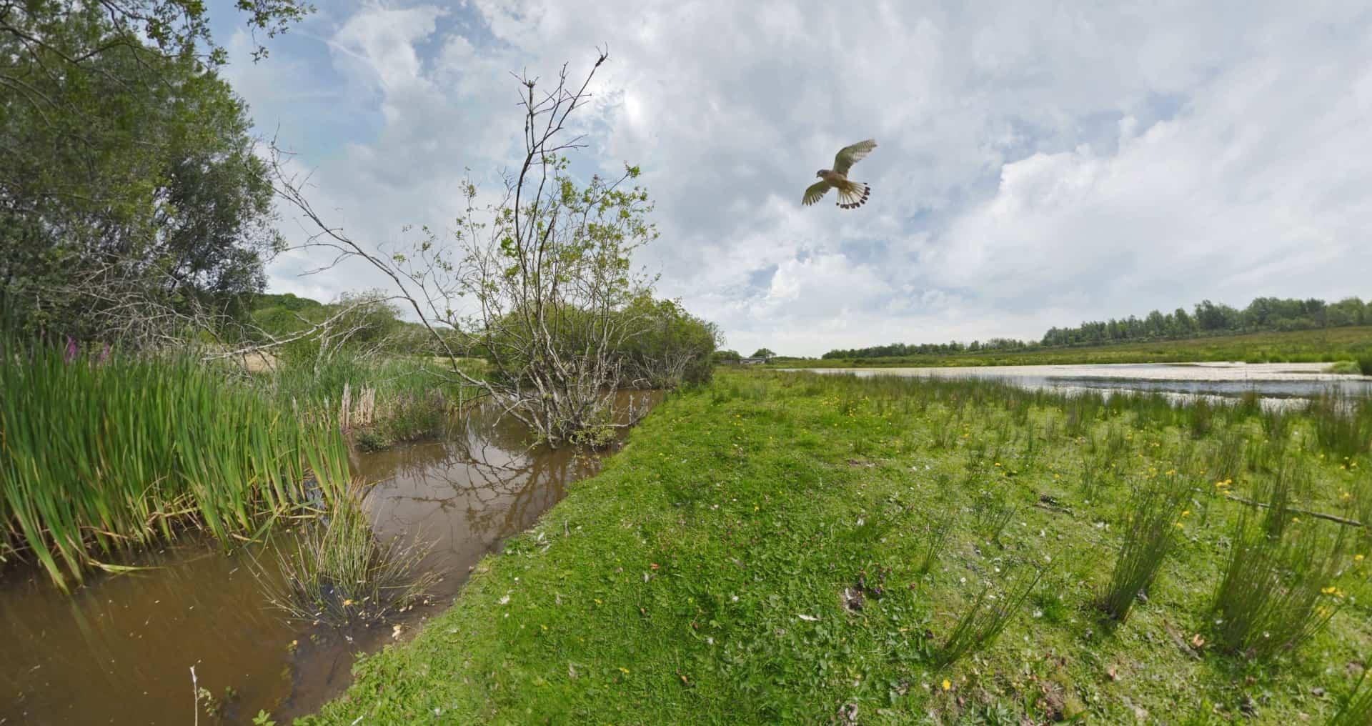 Parc Slip Wildlife Virtual Reality Video Kestrel